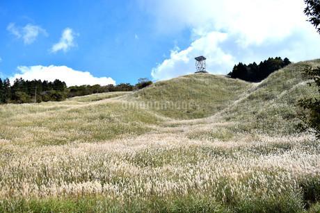 十里木高原展望台のススキの写真素材 [FYI04299444]