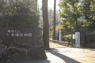 赤塚植物園の写真素材 [FYI04299659]