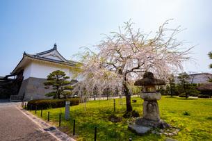 駿府城の桜の写真素材 [FYI04300730]