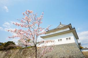 駿府城の桜の写真素材 [FYI04300743]