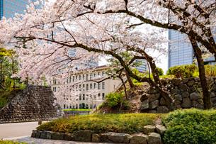 駿府城の桜の写真素材 [FYI04300748]