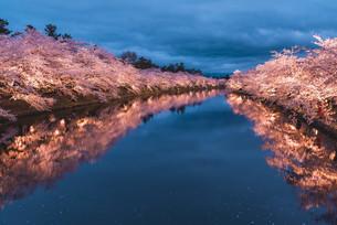 青森県・弘前市・弘前公園の桜(弘前さくらまつり)の写真素材 [FYI04300774]