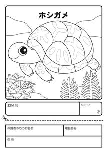 ホシガメ ぬりえ 応募用紙のイラスト素材 [FYI04300929]