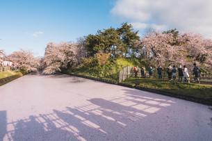 青森県・弘前市・弘前公園の桜と花筏(弘前さくらまつり)の写真素材 [FYI04300965]