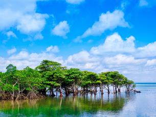 マングローブの森の写真素材 [FYI04301193]