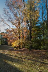 秋の日差し(兵庫県六甲山)の写真素材 [FYI04301265]