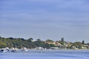 オーストラリア・西オーストラリア州のインド洋沿岸に並ぶ木々と沢山の船と沢山のボートと建物の光景の写真素材 [FYI04301416]