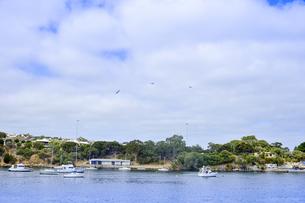 オーストラリア・西オーストラリア州のインド洋沿岸の木々に囲まれたアリーナに停泊する船と建物と鳥の写真素材 [FYI04301434]