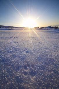 雪原と朝日と足跡の写真素材 [FYI04301476]