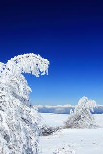 樹氷と鹿島槍ヶ岳など北アルプス遠望の写真素材 [FYI04301500]