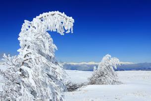 樹氷と鹿島槍ヶ岳など北アルプス遠望の写真素材 [FYI04301501]