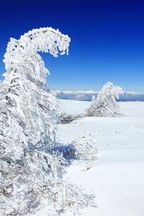 樹氷と鹿島槍ヶ岳など北アルプス遠望の写真素材 [FYI04301502]