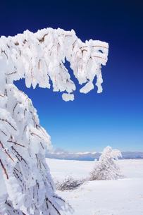樹氷と鹿島槍ヶ岳など北アルプス遠望の写真素材 [FYI04301503]