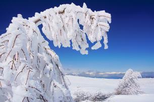 樹氷と鹿島槍ヶ岳など北アルプス遠望の写真素材 [FYI04301504]