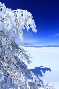 樹氷と白馬連峰など北アルプス遠望の写真素材 [FYI04301505]