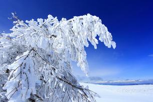 樹氷と白馬連峰など北アルプス遠望の写真素材 [FYI04301506]