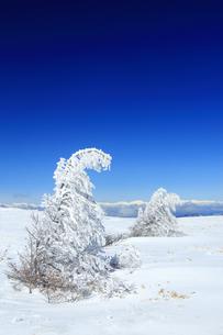 樹氷と鹿島槍ヶ岳など北アルプス遠望の写真素材 [FYI04301507]