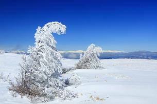 樹氷と白馬連峰など北アルプス遠望の写真素材 [FYI04301508]