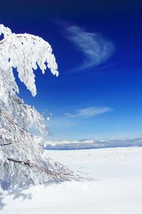 樹氷と鹿島槍ヶ岳など北アルプス遠望の写真素材 [FYI04301509]