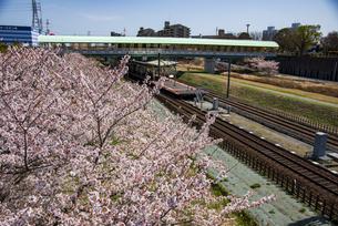 満開の桜と北総線白井駅の写真素材 [FYI04301533]