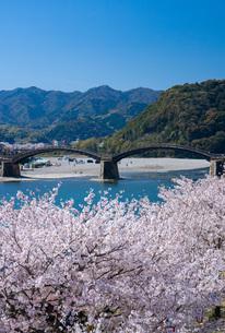 錦帯橋と桜の写真素材 [FYI04301537]