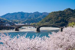 錦帯橋と桜の写真素材 [FYI04301539]