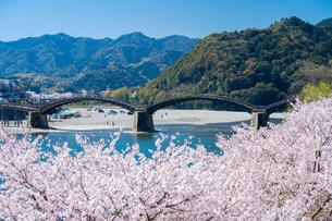 錦帯橋と桜の写真素材 [FYI04301540]