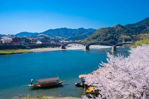 錦帯橋と桜の写真素材 [FYI04301541]