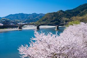 錦帯橋と桜の写真素材 [FYI04301542]