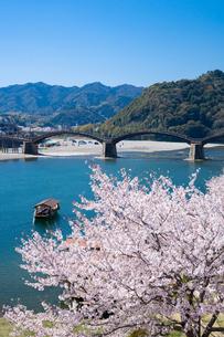 錦帯橋と桜の写真素材 [FYI04301544]