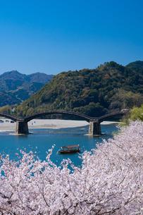 錦帯橋と桜の写真素材 [FYI04301545]