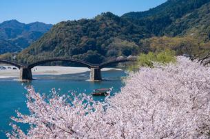 錦帯橋と桜の写真素材 [FYI04301546]