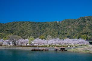 錦川と桜の写真素材 [FYI04301548]
