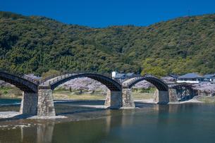 錦帯橋と桜の写真素材 [FYI04301550]