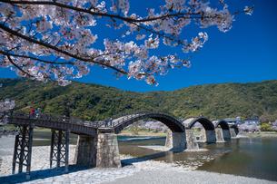 錦帯橋と桜の写真素材 [FYI04301551]
