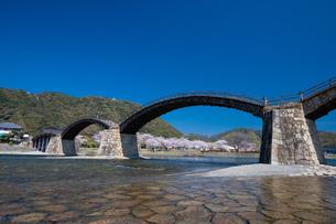 錦帯橋と桜の写真素材 [FYI04301552]