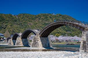 錦帯橋と桜の写真素材 [FYI04301553]