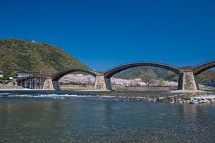 錦帯橋と桜の写真素材 [FYI04301554]