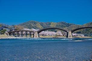 錦帯橋と桜の写真素材 [FYI04301555]