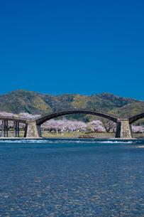 錦帯橋と桜の写真素材 [FYI04301556]