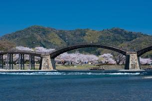 錦帯橋と桜の写真素材 [FYI04301557]