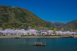 錦川を渡る遊覧船と桜の写真素材 [FYI04301558]