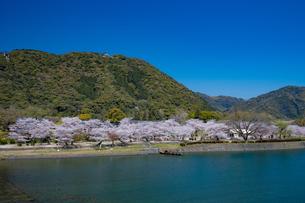 錦川と桜の写真素材 [FYI04301559]