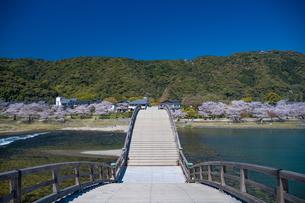 錦帯橋と桜の写真素材 [FYI04301560]
