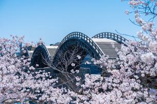 錦帯橋と桜の写真素材 [FYI04301562]