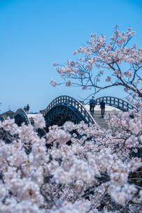 錦帯橋と桜の写真素材 [FYI04301563]