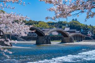 錦帯橋と桜の写真素材 [FYI04301564]
