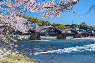 錦帯橋と桜の写真素材 [FYI04301566]