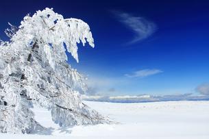 樹氷と鹿島槍ヶ岳など北アルプス遠望の写真素材 [FYI04301630]