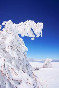 樹氷と鹿島槍ヶ岳など北アルプス遠望の写真素材 [FYI04301631]